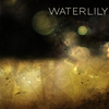 Waterlily7067