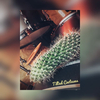 tiltedcactus