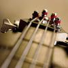 Bass121234
